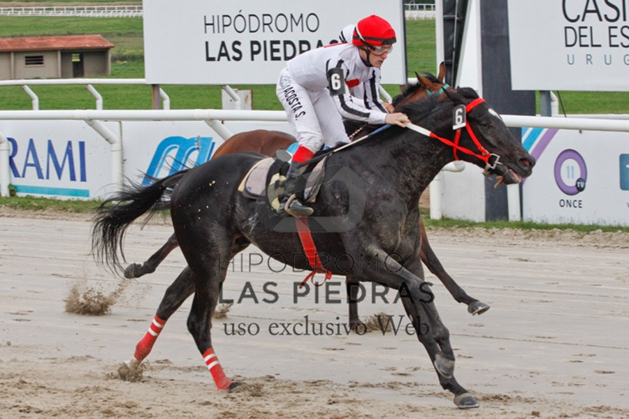 Jaque Mate (Smarty Jones) se impuso en Condicional (1300m-Arena-LPI). - Staff ElTurf.com